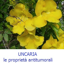 Uncaria-Tomentosa